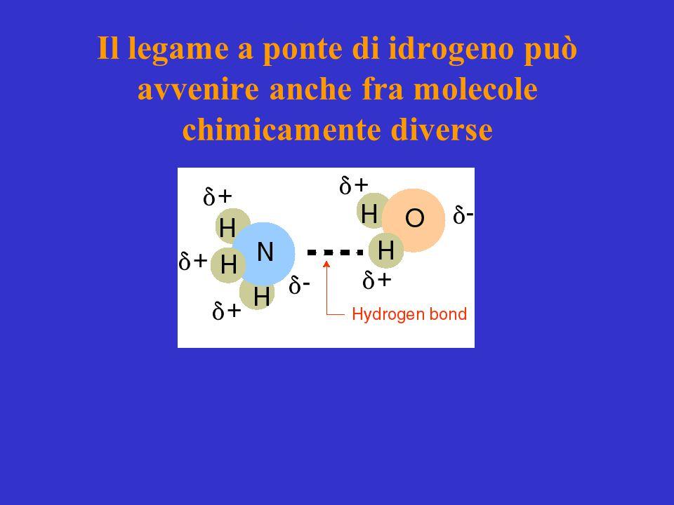 Il legame a ponte di idrogeno può avvenire anche fra molecole chimicamente diverse