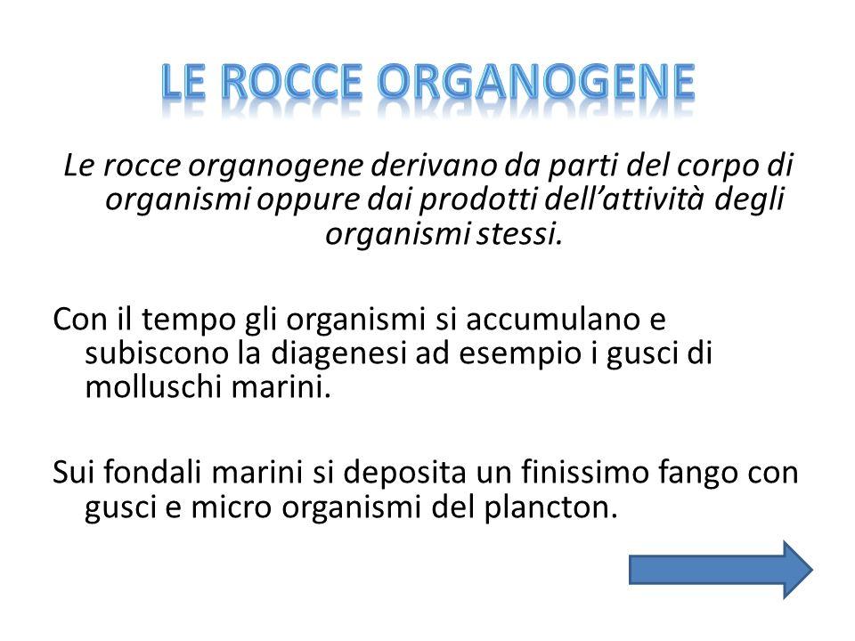 Le rocce organogene