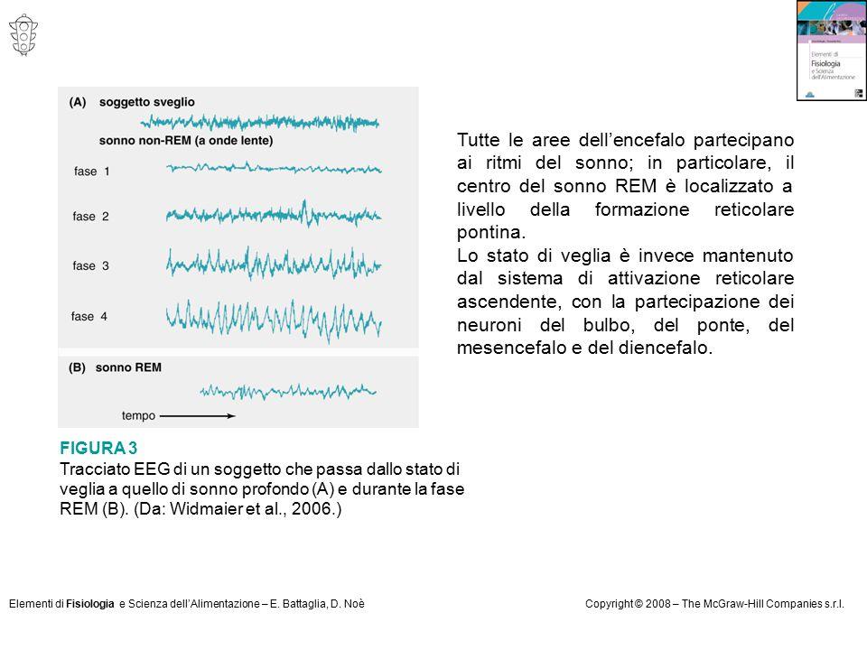 Tutte le aree dell'encefalo partecipano ai ritmi del sonno; in particolare, il centro del sonno REM è localizzato a livello della formazione reticolare pontina.