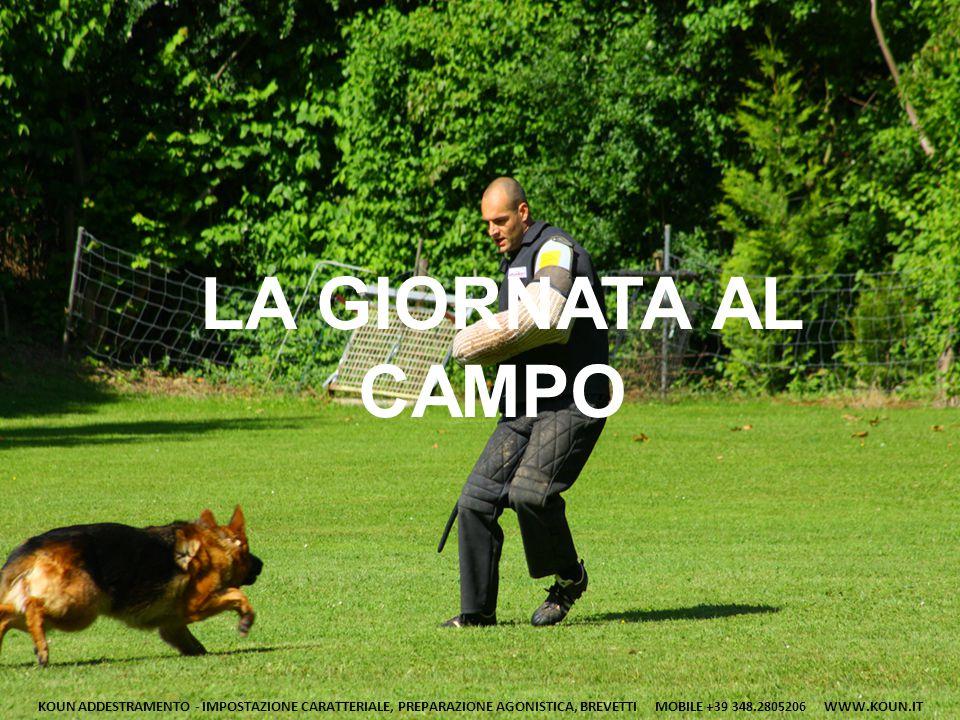 LA GIORNATA AL CAMPO KOUN ADDESTRAMENTO - IMPOSTAZIONE CARATTERIALE, PREPARAZIONE AGONISTICA, BREVETTI MOBILE +39 348.2805206 WWW.KOUN.IT.