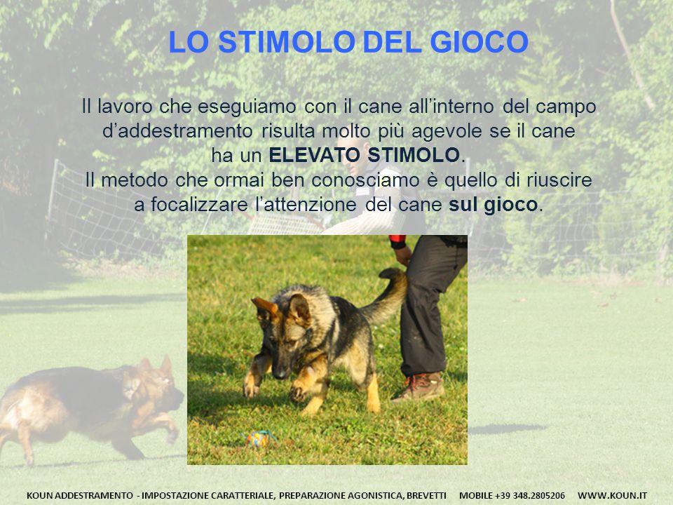 LO STIMOLO DEL GIOCO Il lavoro che eseguiamo con il cane all'interno del campo. d'addestramento risulta molto più agevole se il cane.