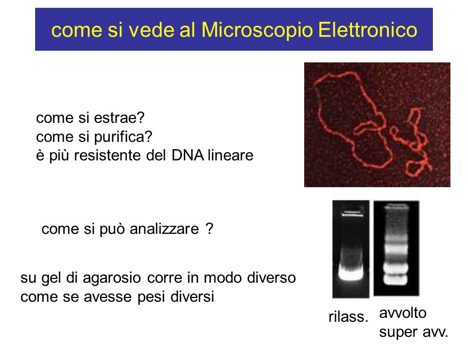 come si vede al Microscopio Elettronico