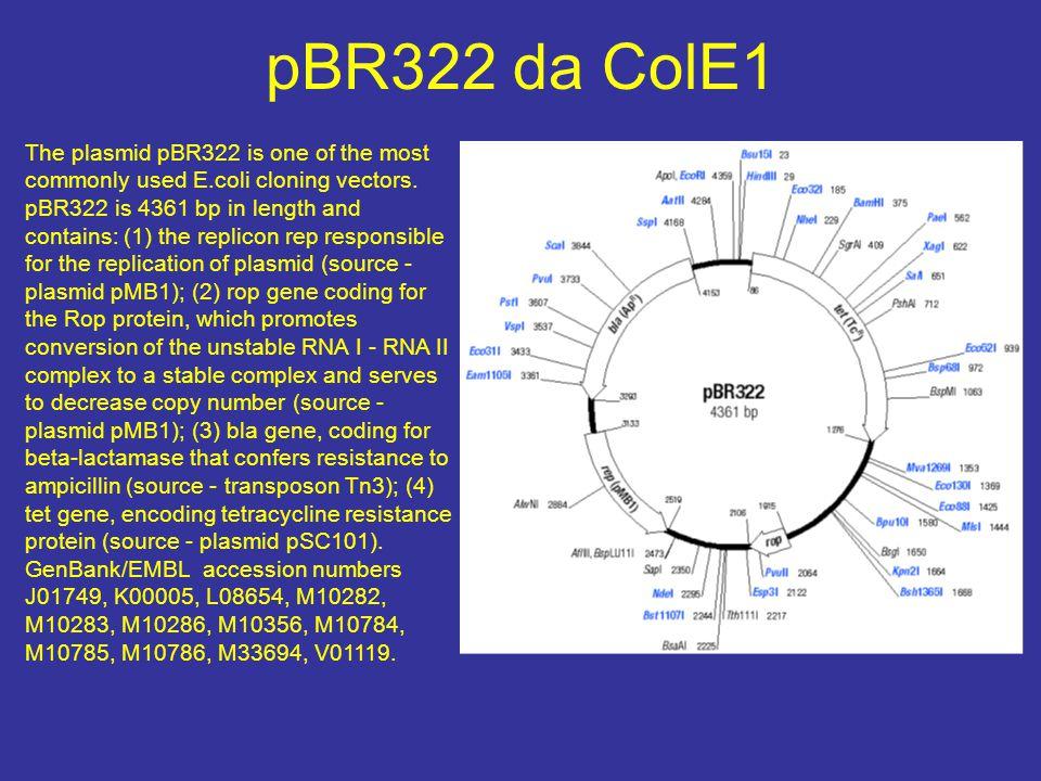 pBR322 da ColE1