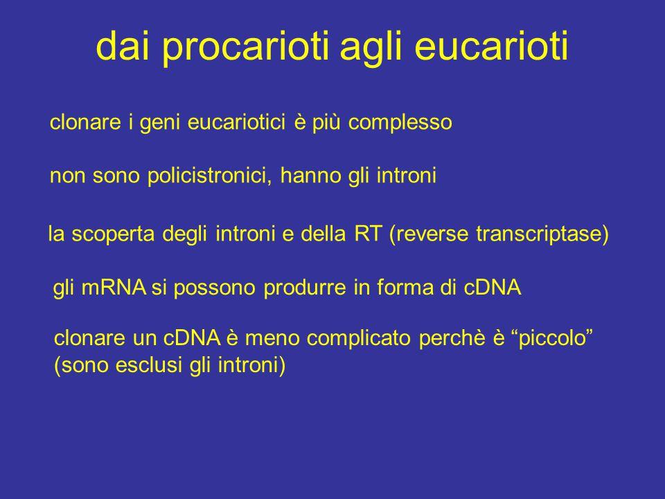 dai procarioti agli eucarioti