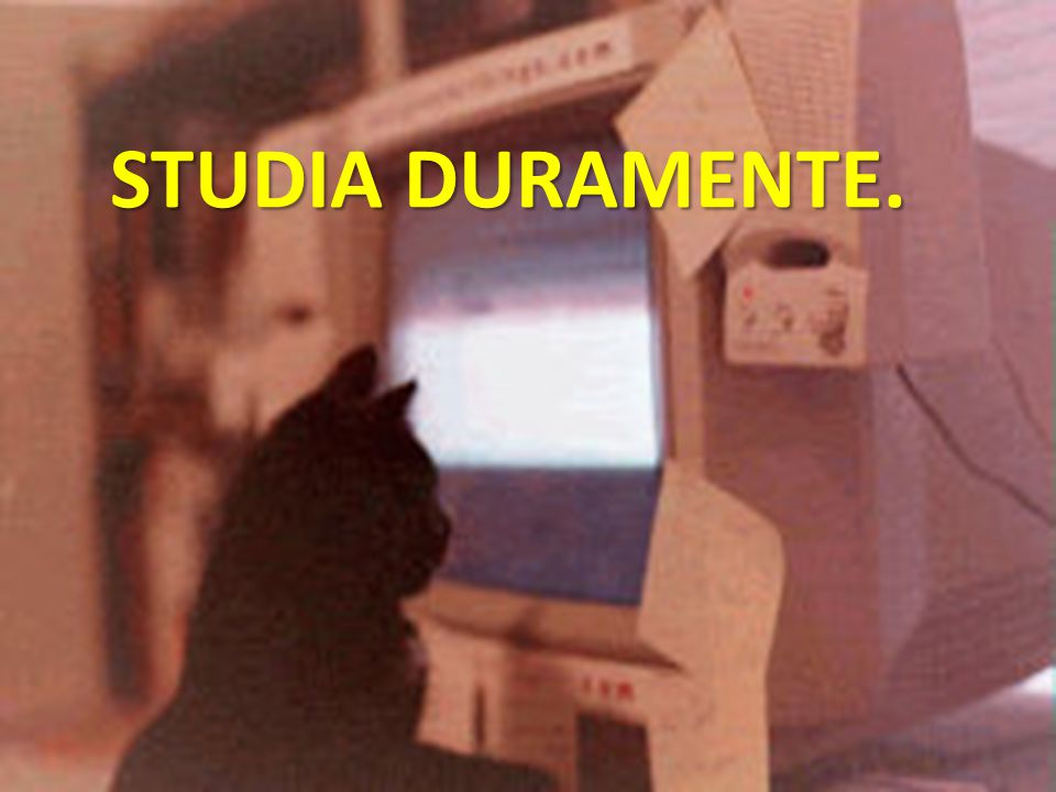 STUDIA DURAMENTE.