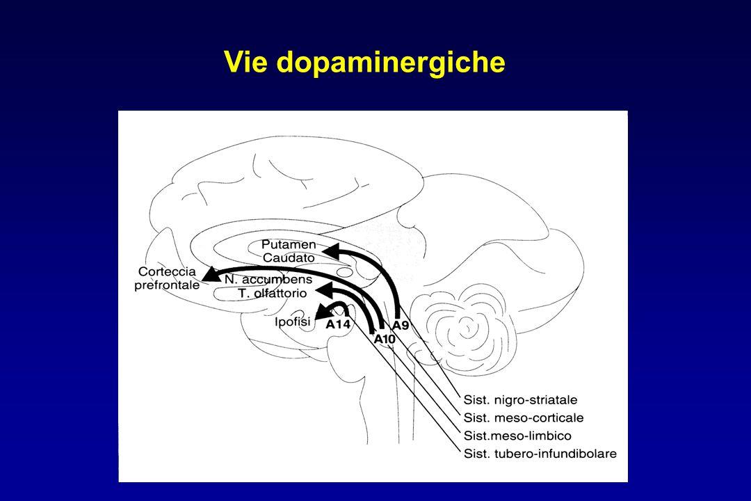 Vie dopaminergiche