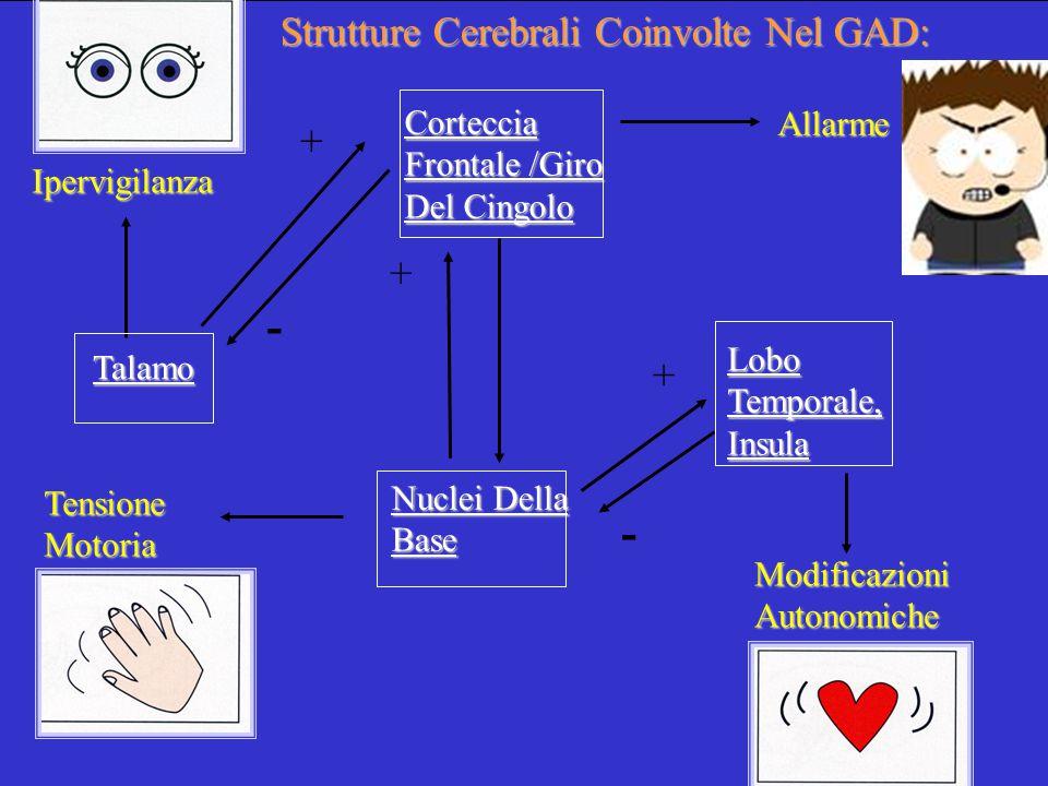 - - Strutture Cerebrali Coinvolte Nel GAD: + + +