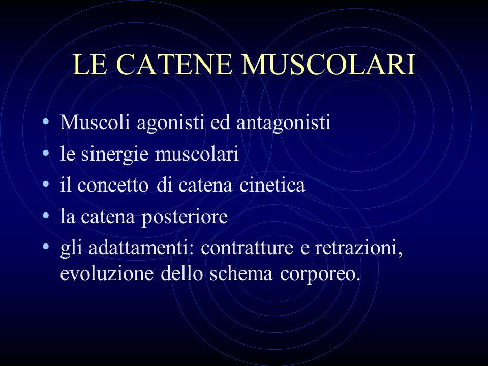 LE CATENE MUSCOLARI Muscoli agonisti ed antagonisti