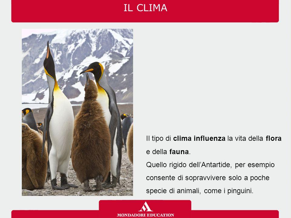 IL CLIMA Il tipo di clima influenza la vita della flora e della fauna.