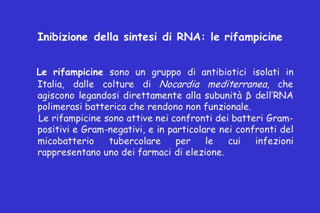 Inibizione della sintesi di RNA: le rifampicine