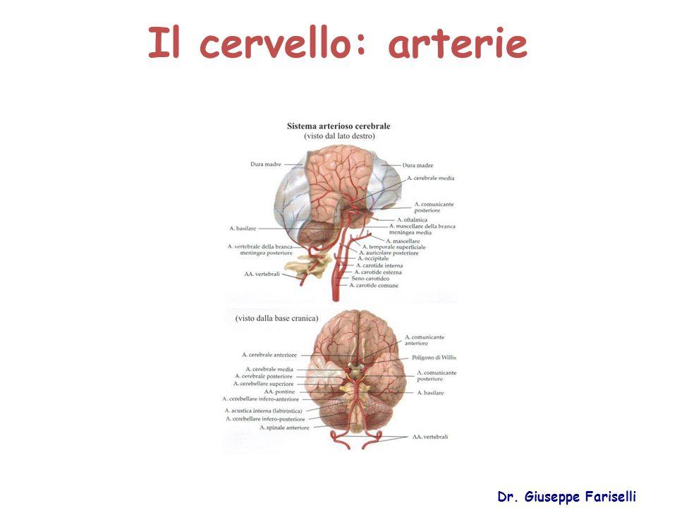 Il cervello: arterie Dr. Giuseppe Fariselli