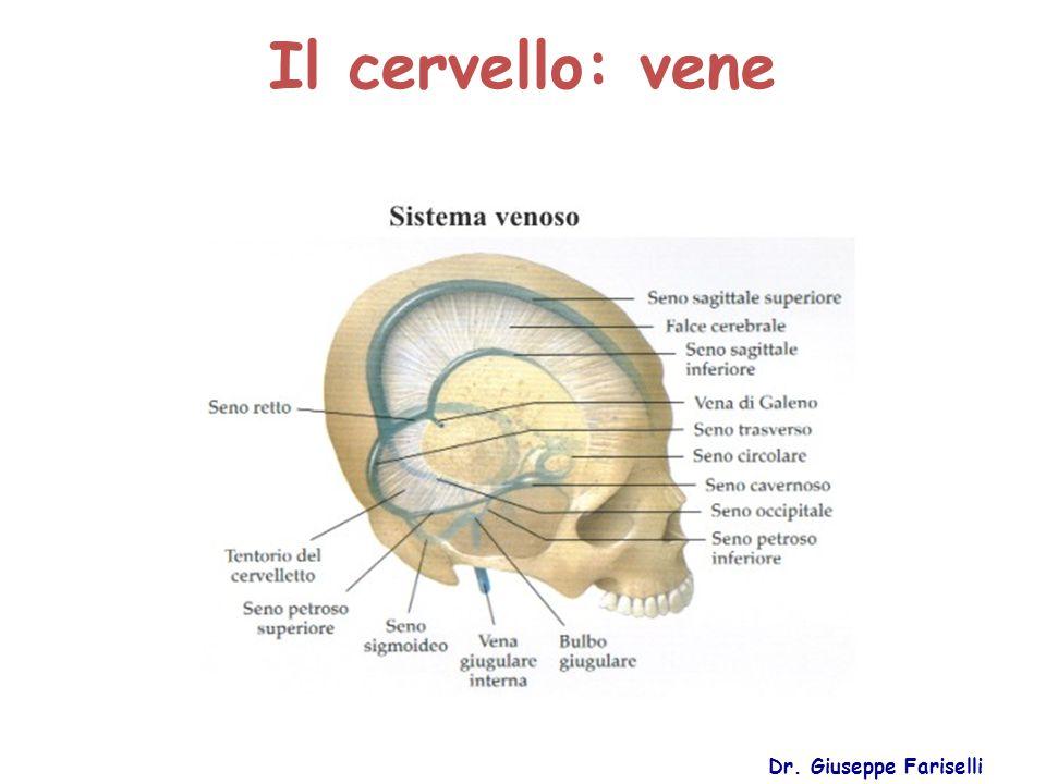 Il cervello: vene Dr. Giuseppe Fariselli