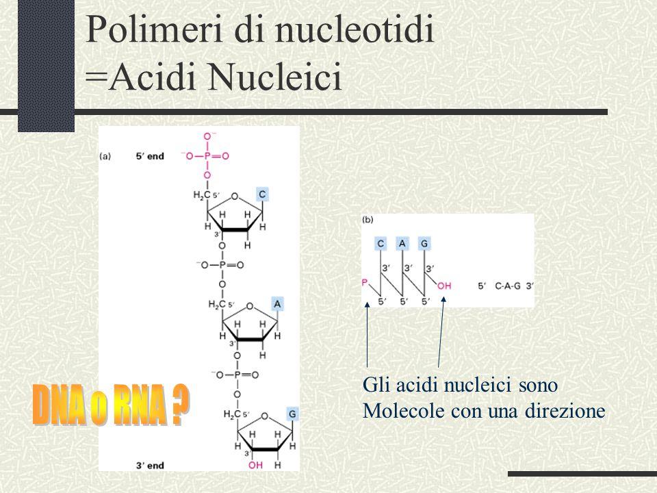 Polimeri di nucleotidi =Acidi Nucleici