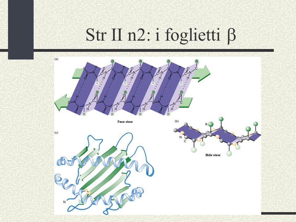 Str II n2: i foglietti b