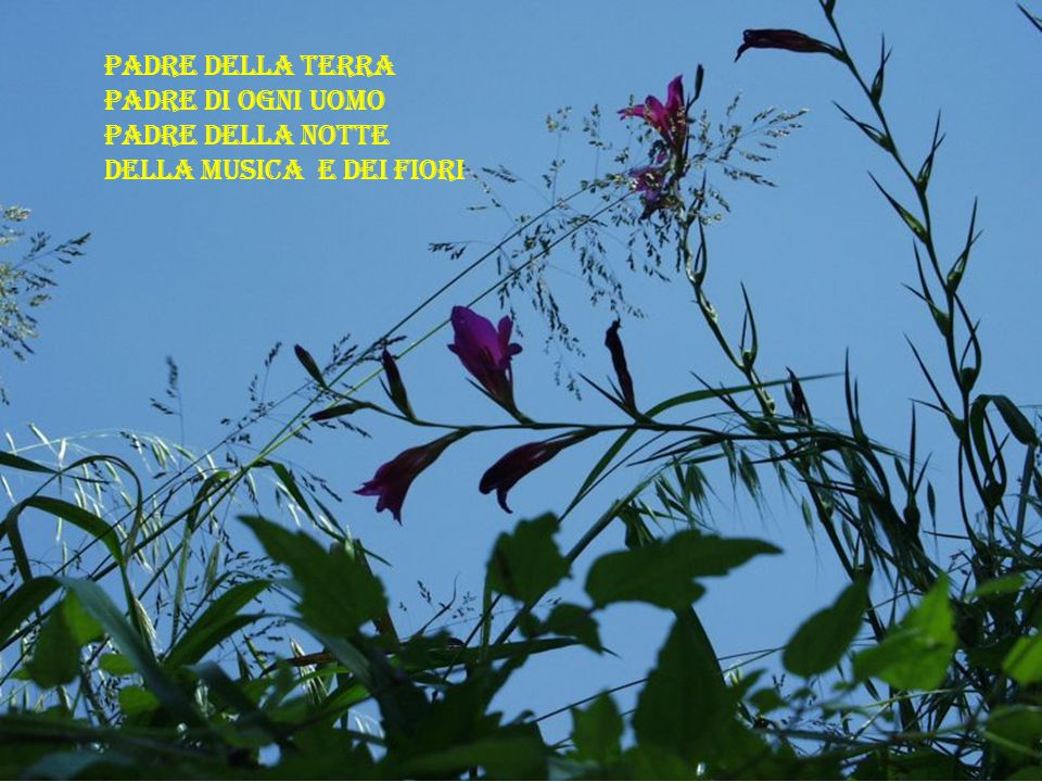 Padre della terra Padre di ogni uomo Padre della notte della musica e dei fiori