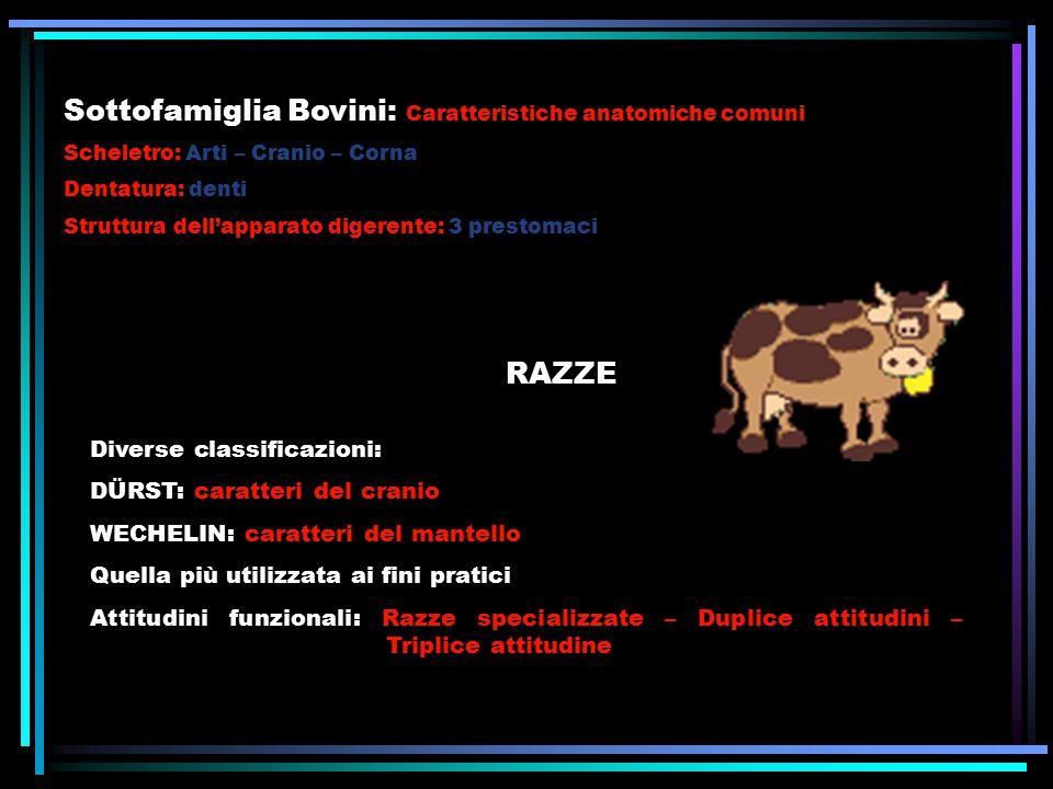 Sottofamiglia Bovini: Caratteristiche anatomiche comuni