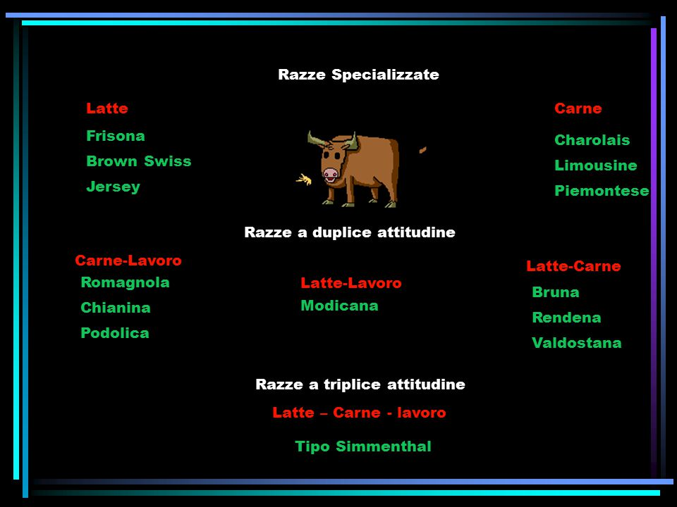 Razze Specializzate Latte. Carne. Frisona. Brown Swiss. Jersey. Charolais. Limousine. Piemontese.