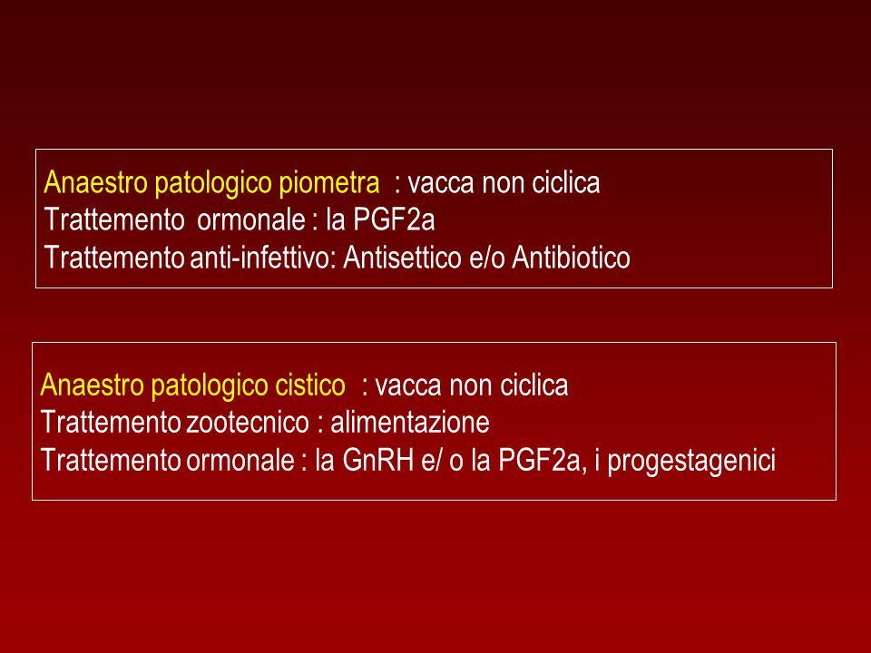 Anaestro patologico piometra : vacca non ciclica Trattemento ormonale : la PGF2a