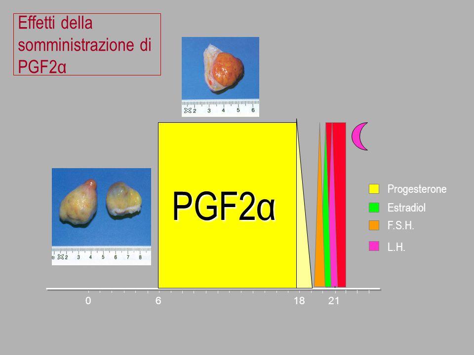 Effetti della somministrazione di PGF2α