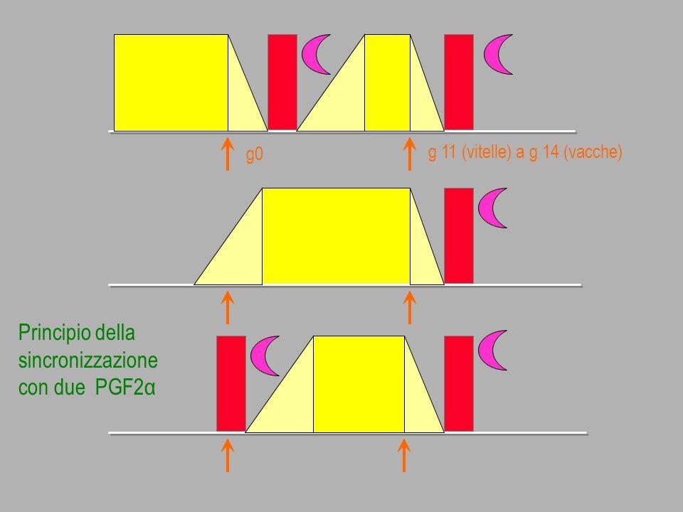 Principio della sincronizzazione con due PGF2α g0