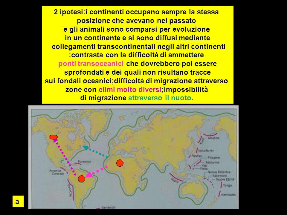 2 ipotesi:i continenti occupano sempre la stessa