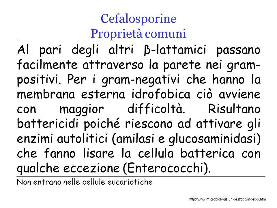 Cefalosporine Proprietà comuni