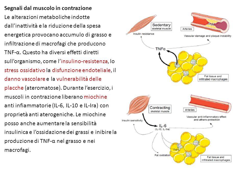 Segnali dal muscolo in contrazione
