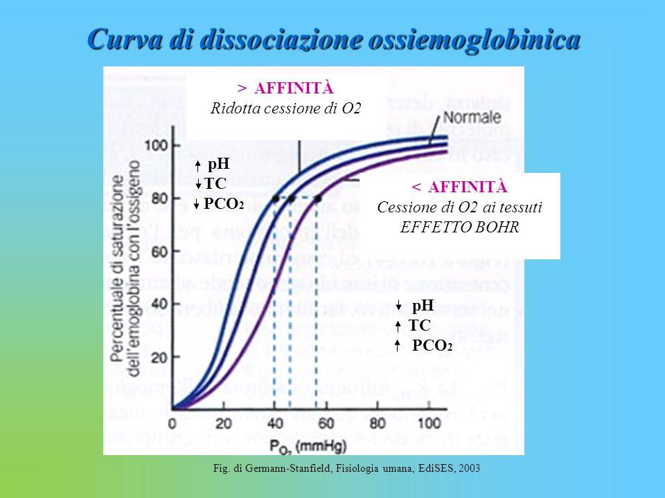 Curva di dissociazione ossiemoglobinica