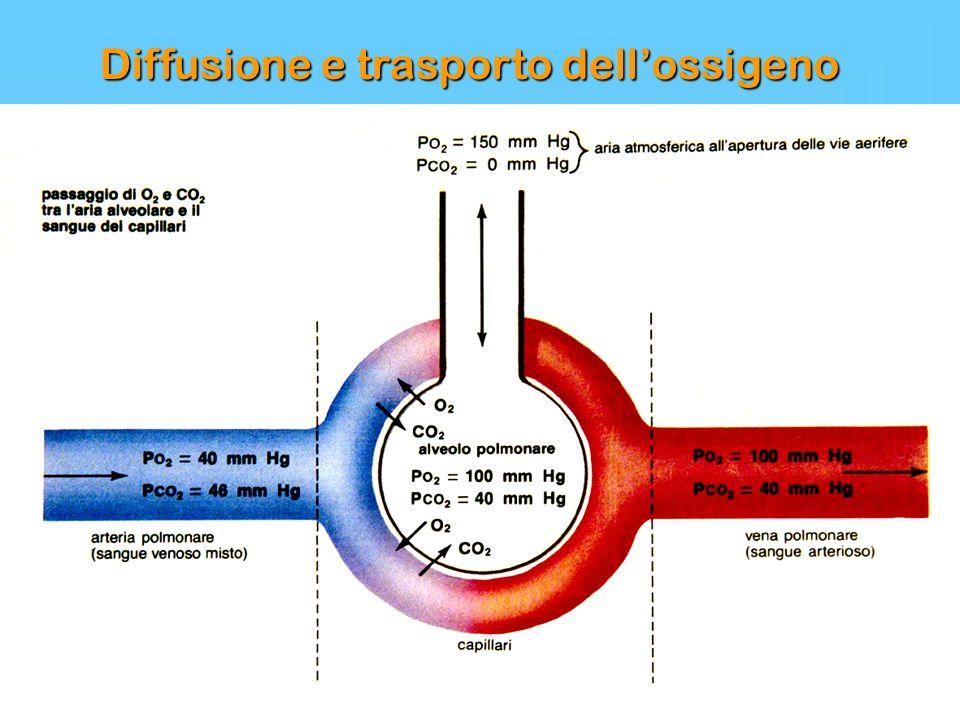 Diffusione e trasporto dell'ossigeno