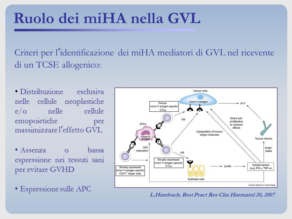 Ruolo dei miHA nella GVL