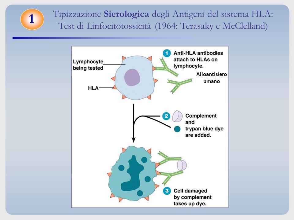 Tipizzazione Sierologica degli Antigeni del sistema HLA: Test di Linfocitotossicità (1964: Terasaky e McClelland)