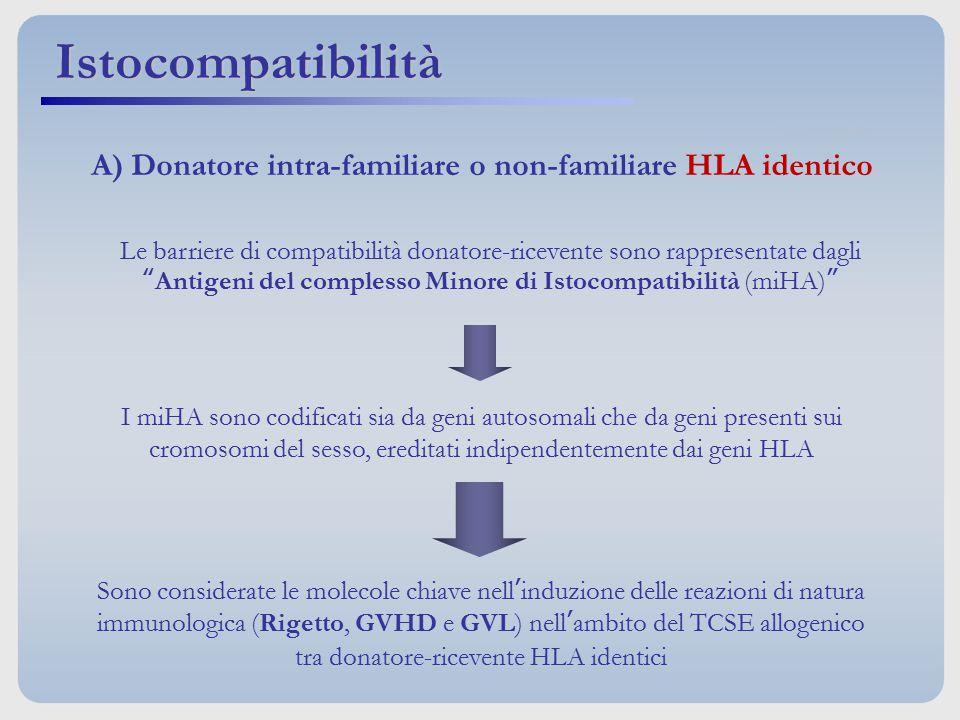 Antigeni del complesso Minore di Istocompatibilità (miHA)