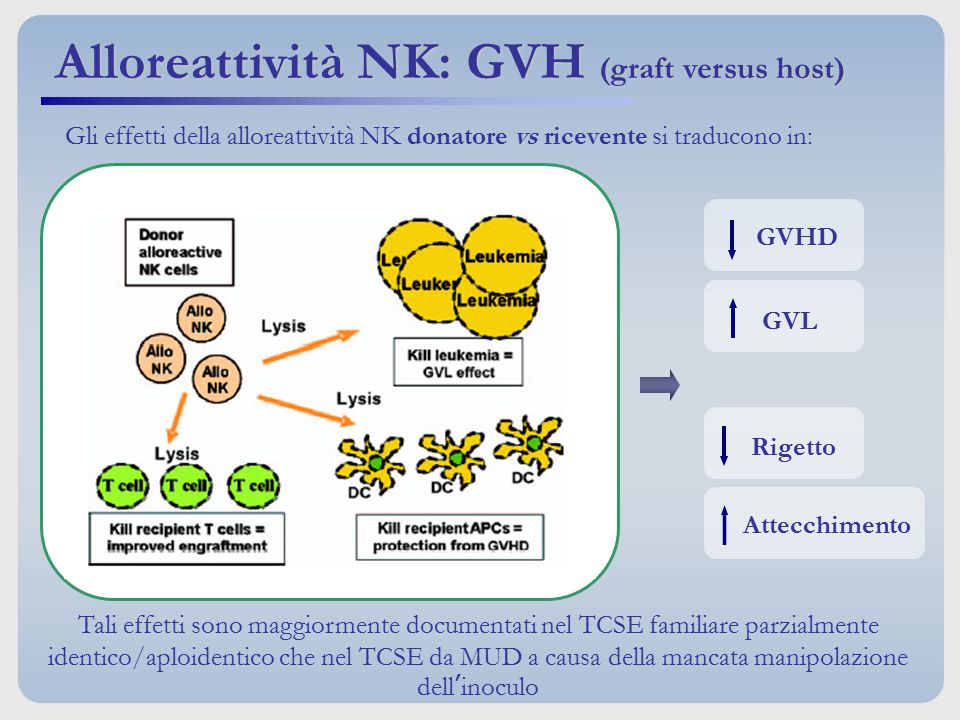 Alloreattività NK: GVH (graft versus host)