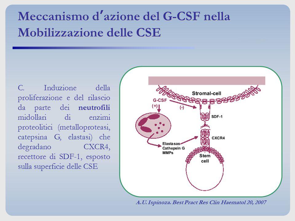 Meccanismo d'azione del G-CSF nella Mobilizzazione delle CSE
