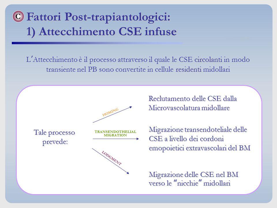 Fattori Post-trapiantologici: 1) Attecchimento CSE infuse