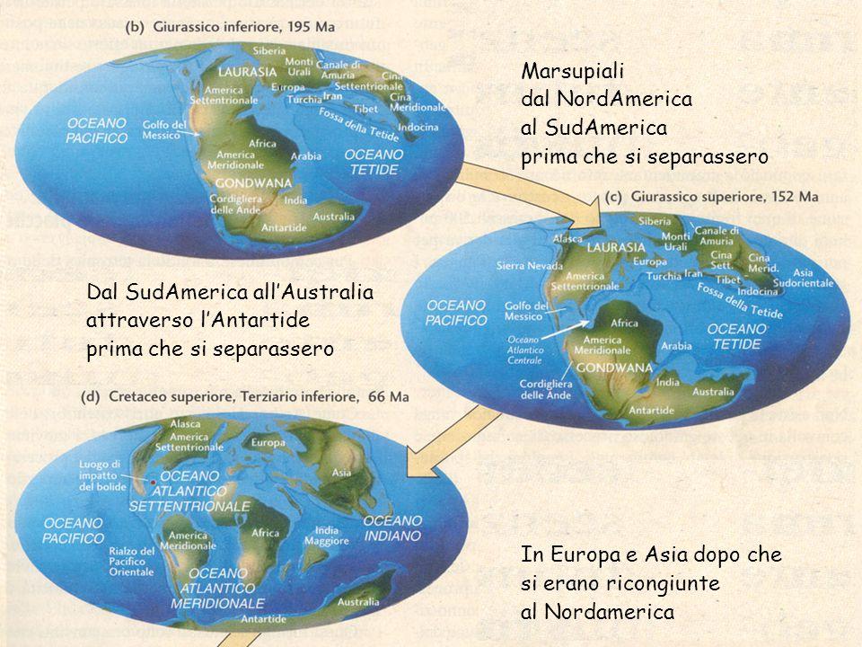 Marsupiali dal NordAmerica. al SudAmerica. prima che si separassero. In Europa e Asia dopo che. si erano ricongiunte.