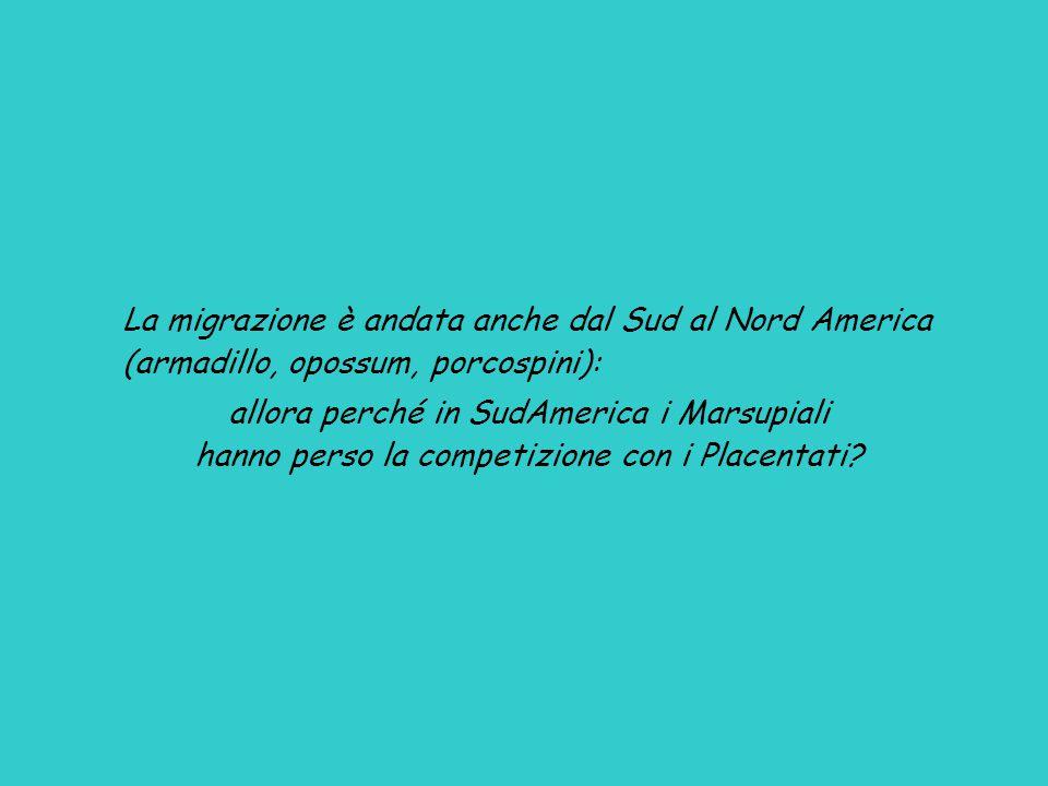 La migrazione è andata anche dal Sud al Nord America