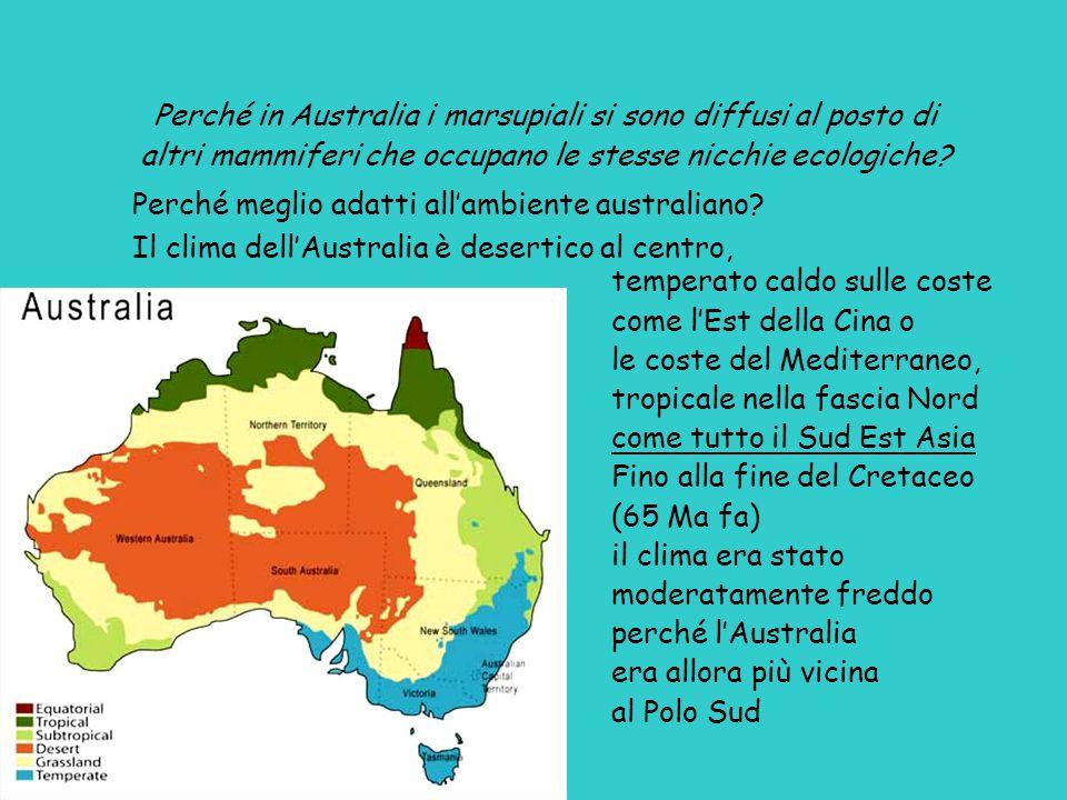 Perché in Australia i marsupiali si sono diffusi al posto di altri mammiferi che occupano le stesse nicchie ecologiche