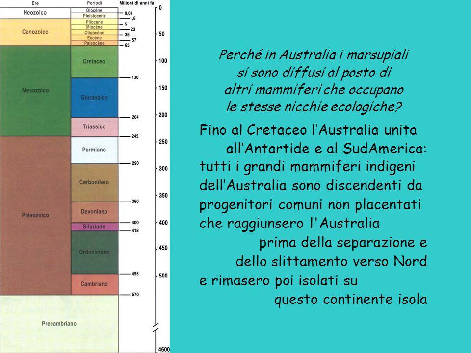 Fino al Cretaceo l'Australia unita all'Antartide e al SudAmerica: