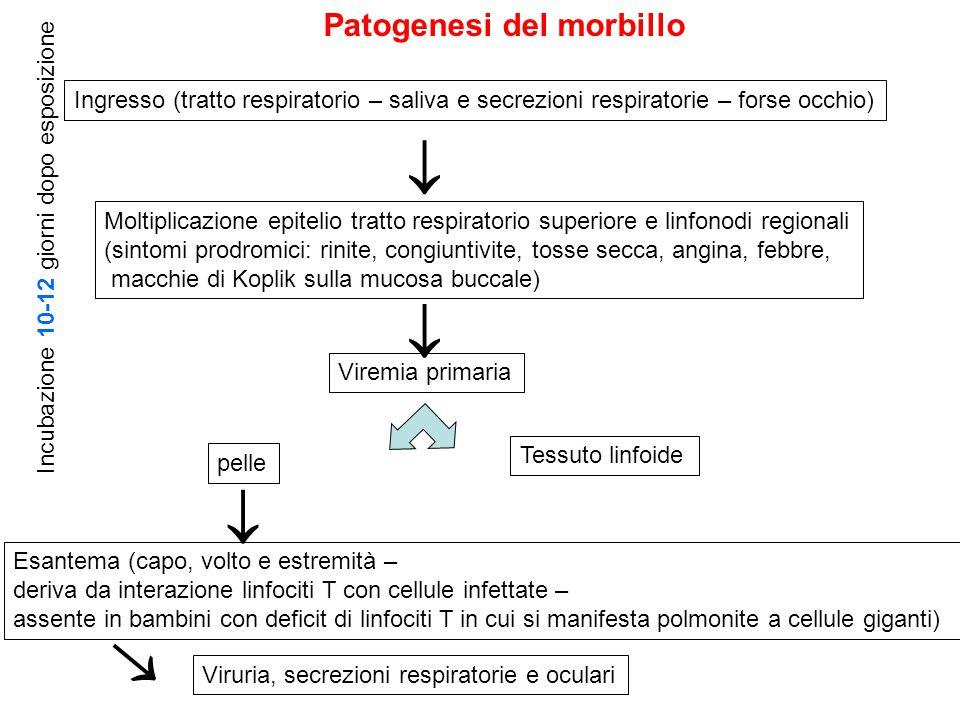     Patogenesi del morbillo
