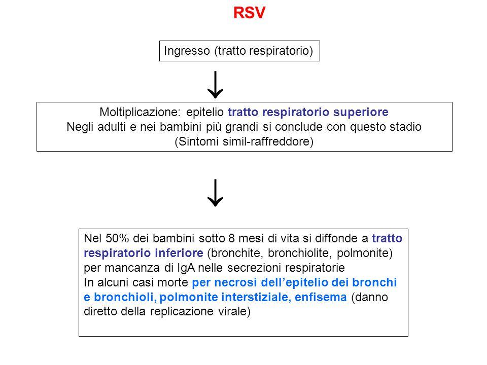   RSV Ingresso (tratto respiratorio)