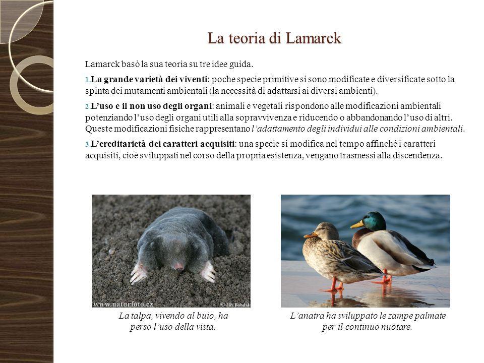 La teoria di Lamarck Lamarck basò la sua teoria su tre idee guida.