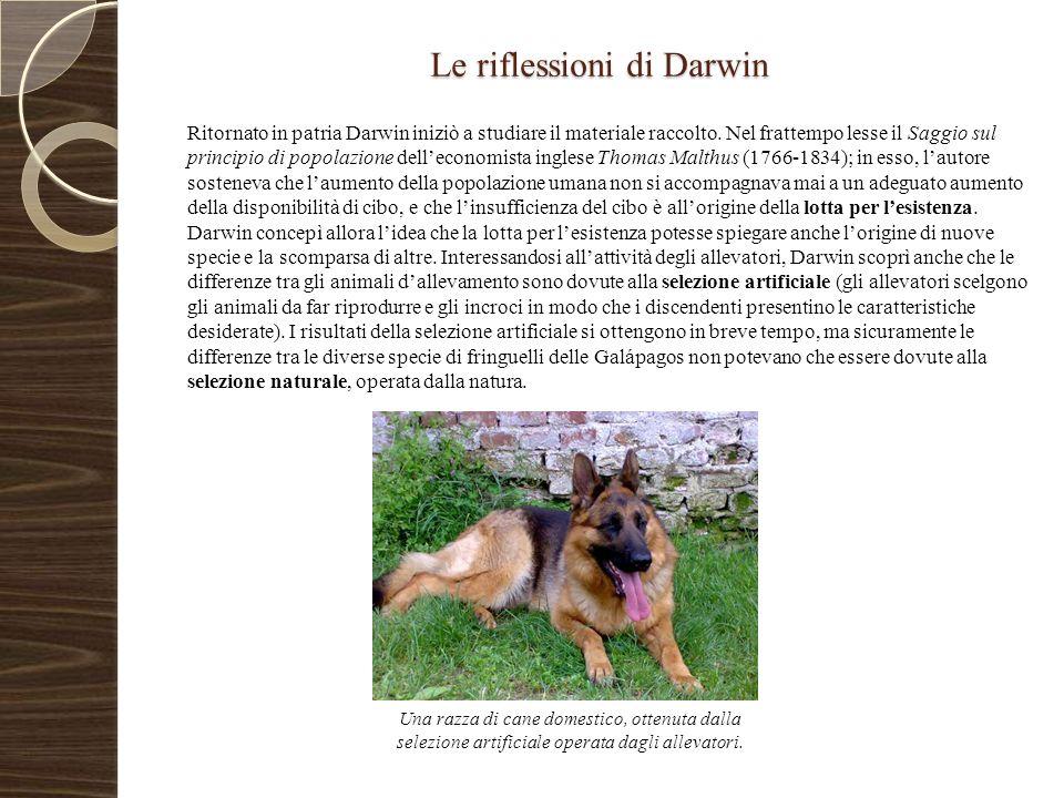 Le riflessioni di Darwin