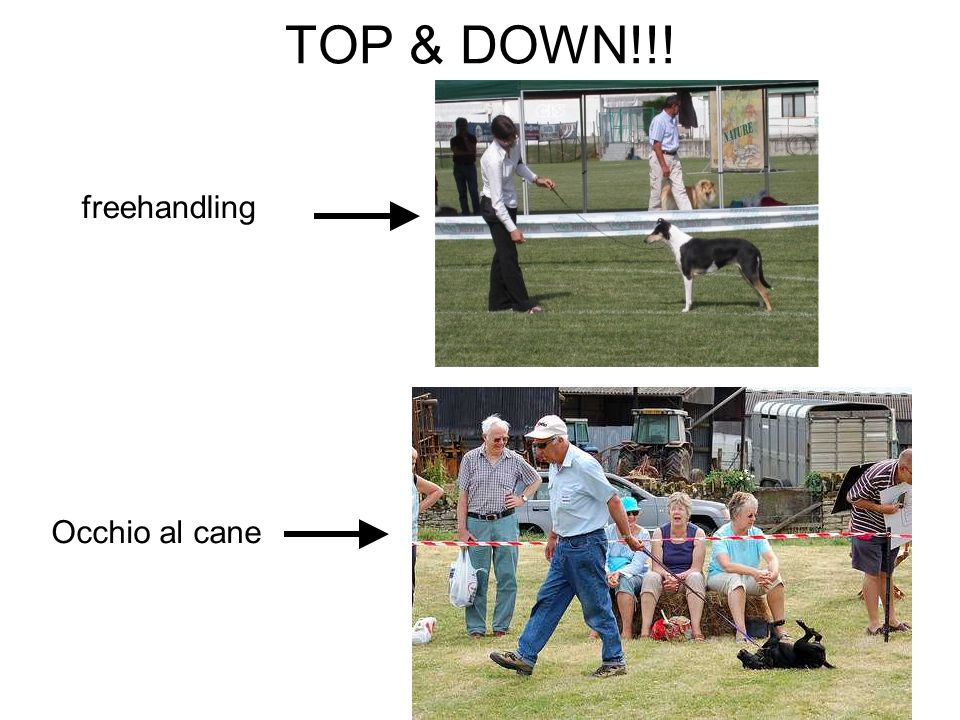TOP & DOWN!!! freehandling Occhio al cane