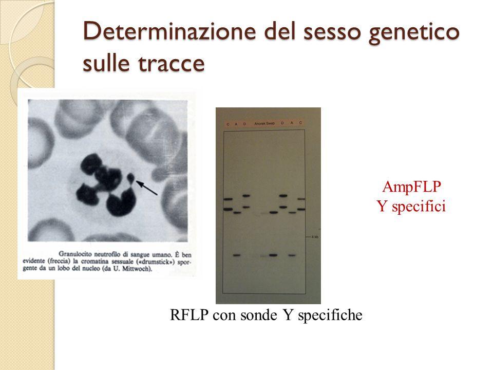 Determinazione del sesso genetico sulle tracce
