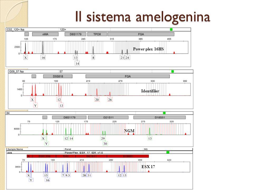Il sistema amelogenina