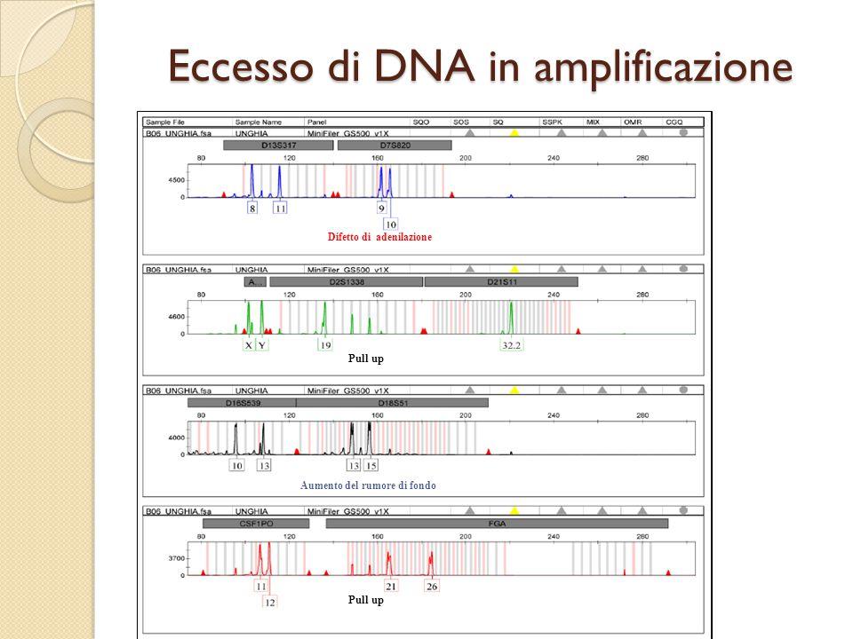 Eccesso di DNA in amplificazione