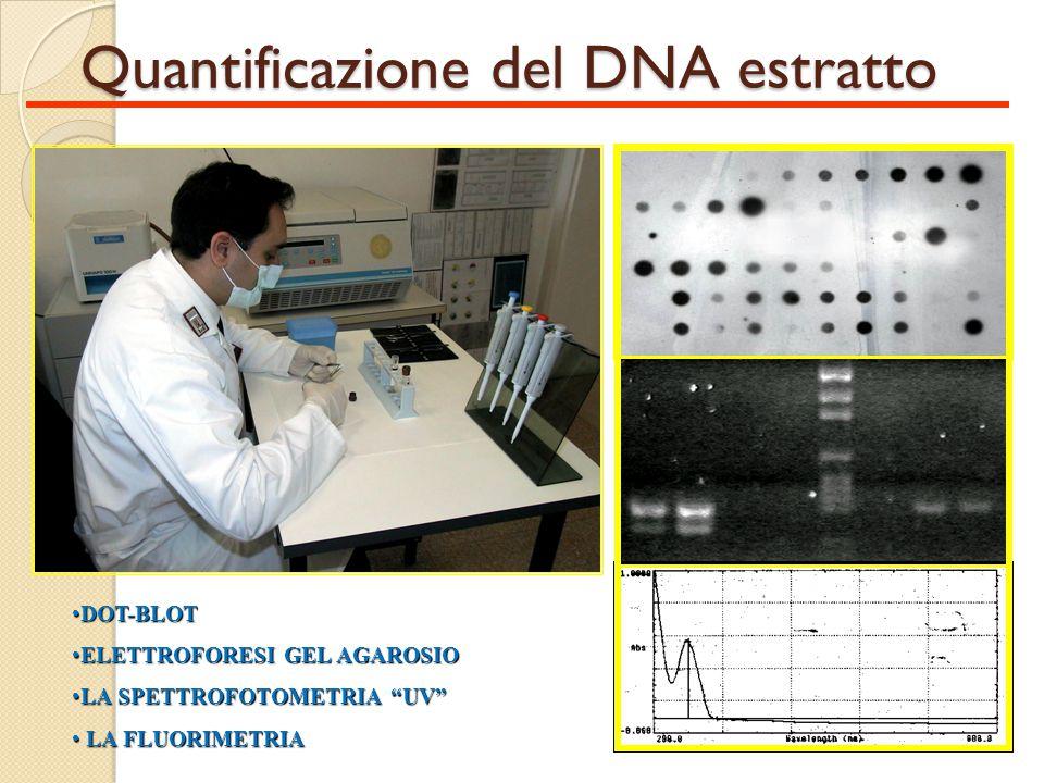 Quantificazione del DNA estratto