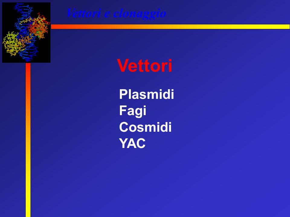 Vettori e clonaggio Vettori Plasmidi Fagi Cosmidi YAC