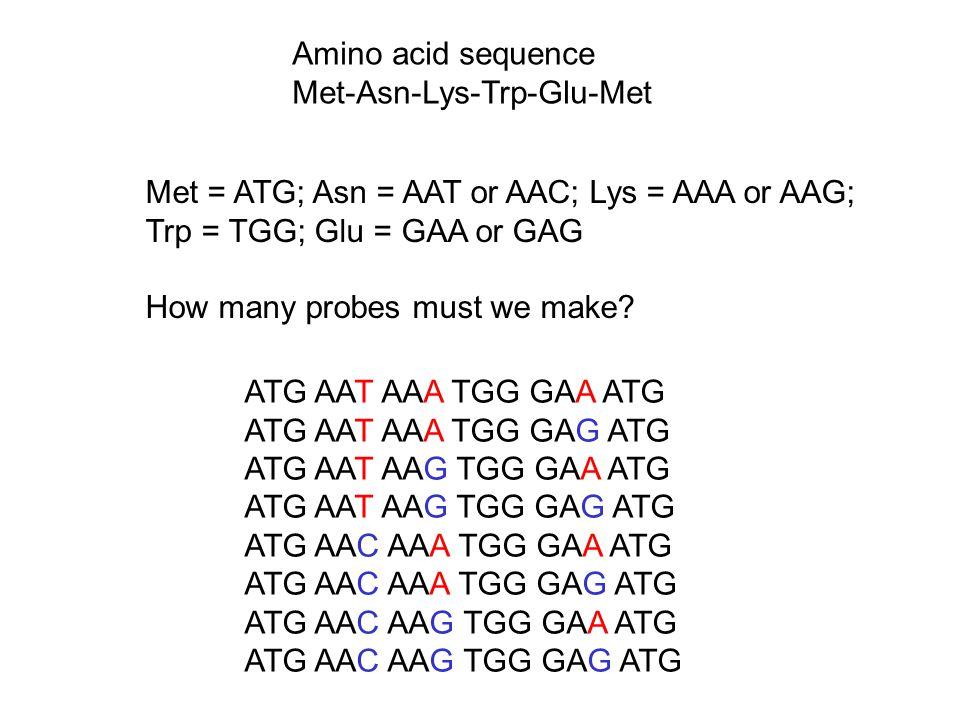 Amino acid sequence Met-Asn-Lys-Trp-Glu-Met. Met = ATG; Asn = AAT or AAC; Lys = AAA or AAG; Trp = TGG; Glu = GAA or GAG.